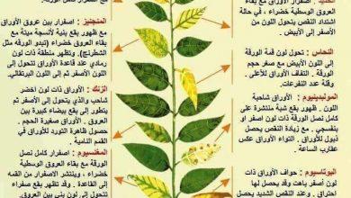 صورة وظائف العناصر الغذائية المعدنية