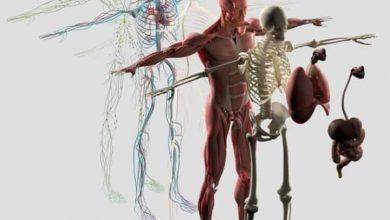صورة معلومة تهمك.. تعرف على الجسم البشري