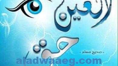 صورة الحسد بقلم محمد عكاشة