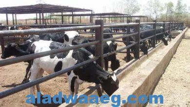 صورة غرفة الألبان: مشاكل تواجه القطاع تنذر بتراجع الأبقار المنتجة