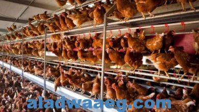 صورة تفشي عدوى فيروسية شديدة بأنفلونزا الطيور بهولندا