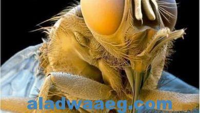 صورة البعوضة.. معلومات رائعة عن هذه المخلوقة