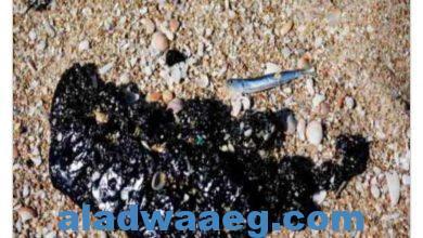 صورة السفينة التي لوثت شواطئ اسرائيل مالكها سوري الجنسية