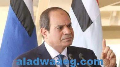 صورة المتحدث الإقليمي لأمريكايثمن جهود الرئيس السيسي في حل الأزمة الليبية