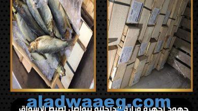 """صورة ضبط صاحب محل لبيع الأسماك المملحة """"بدون ترخيص"""" بميت غمر.. لحيازته (عدد 150 كيلو جرام فسيخ وسردين مملح) بدون بيانات"""