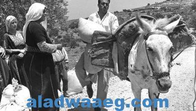 صورة قرية خربة أم صابونة الفلسطينية المُهجرة