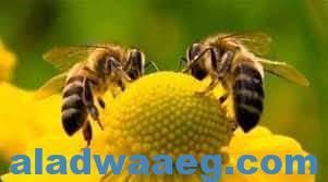 صورة الخلية والعسل     الجزء الثانى