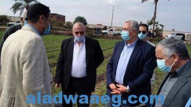 صورة وزير الزراعة انطلاق موسم حصاد القمح والمحصول يبشر بالخير هذا العام