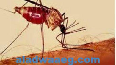 صورة بعد لقاحات كورونا.. هل يصبح العالم على موعد قريب مع لقاح الملاريا